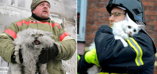 Featured-firefighters-rescue-cats-FB