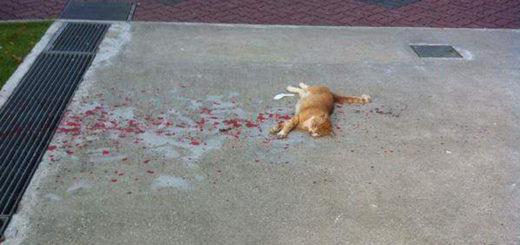 Featured-rescue-bleeding-cat-FB