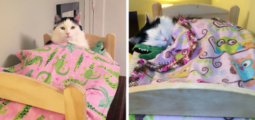 Featured-rescue-cat-sleeps-doll-bed-sophie-FB