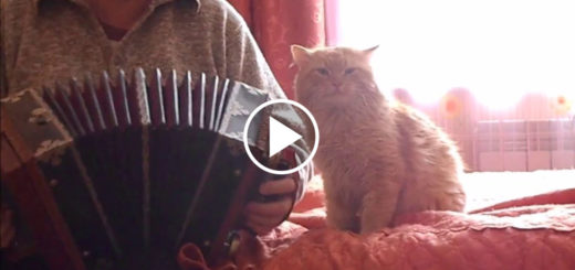 Featured-Accordian-Kitty-FB