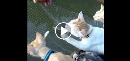 Featured-Cats-Fishing-FB