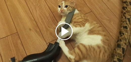 Featured-Kitties-Better-FB