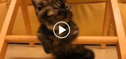 Featured-Sleepy-Kitten-FB