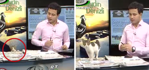 Featured-stray-cat-live-tv-news-turkey-FB