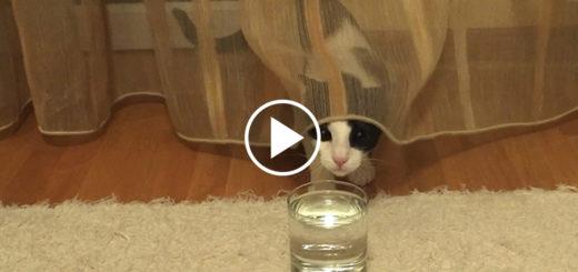 Featured-Cat-Soda-FB