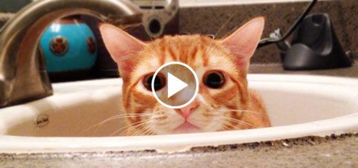Featured-Cats-Bathroom-FB