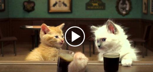 Featured-Irish-Kittens-Guiness-FB
