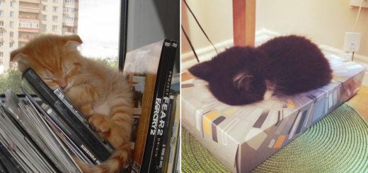 Featured-Sleepiest-Kitties-FB