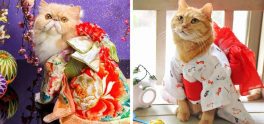 Featured-cat-kimonos-japan-fb