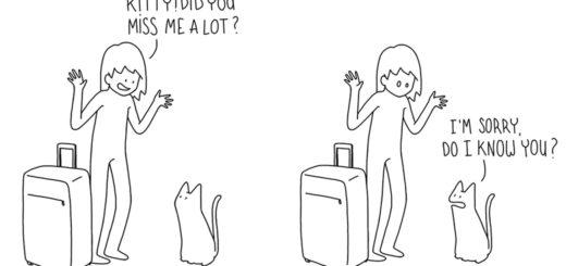 Featured-funny-cat-comic-strip-catsass-claude-combacau-FB