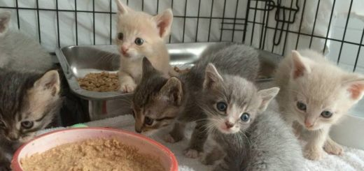 Featured-mother-leads-rescuer-FB