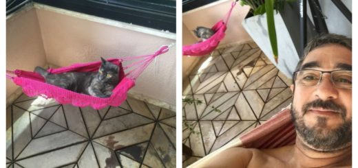 hammock-cat-feature