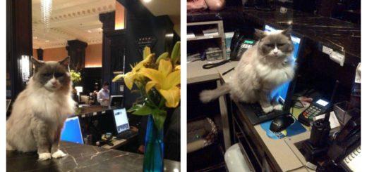 matilda-hotel-cat-feature