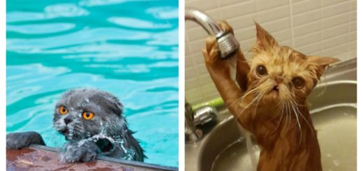 water-cats-feature