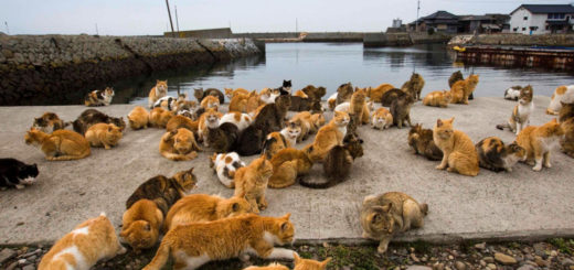 Featured-10-Places-Cat-Lovers