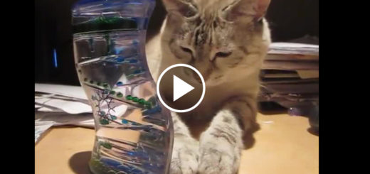 Featured-Kitty-Mesmerized-Bubble-Timer-FB