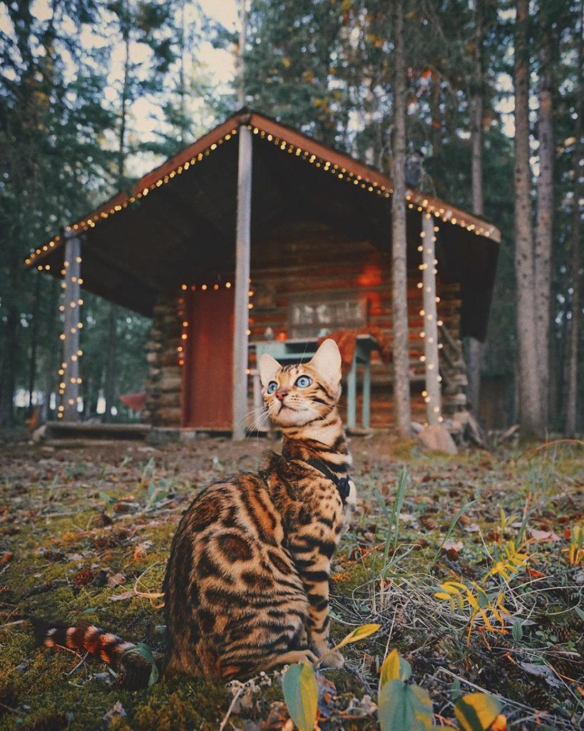 adventures-suki-the-cat-canada-10