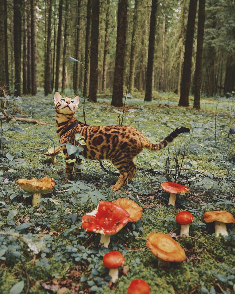adventures-suki-the-cat-canada-11