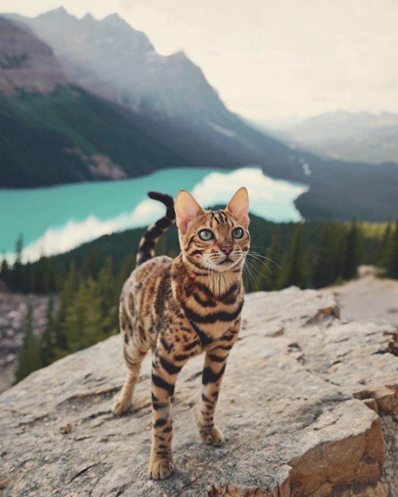 adventures-suki-the-cat-canada-12