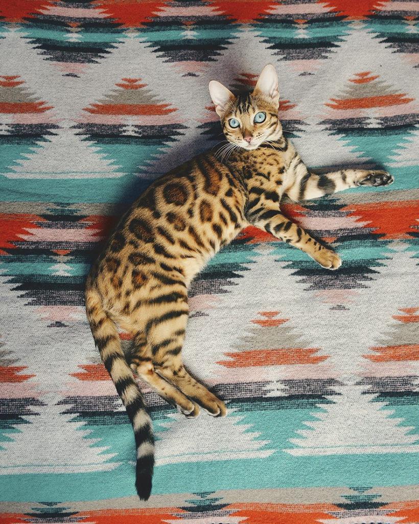 adventures-suki-the-cat-canada-15