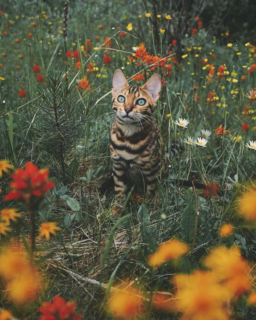 adventures-suki-the-cat-canada-2