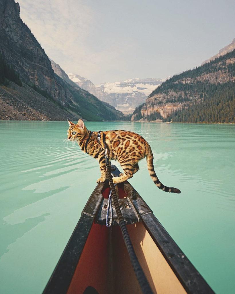 adventures-suki-the-cat-canada-4