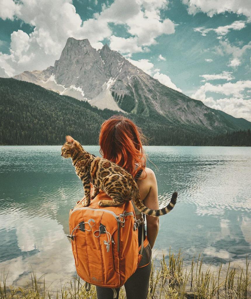 adventures-suki-the-cat-canada-6
