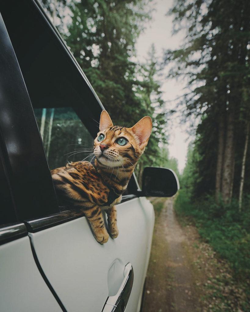 adventures-suki-the-cat-canada-7