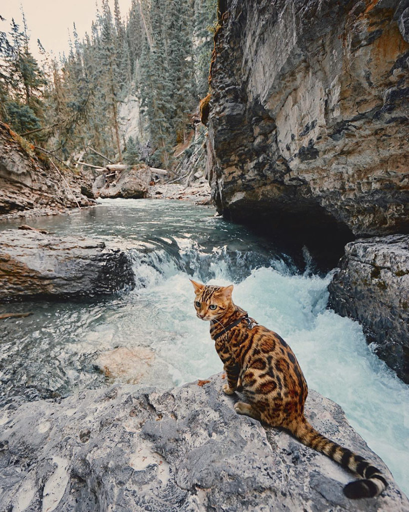 adventures-suki-the-cat-canada-8