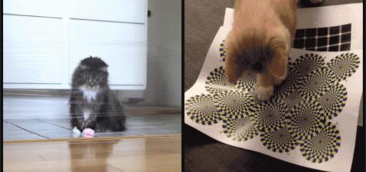 cat-pranks-feature