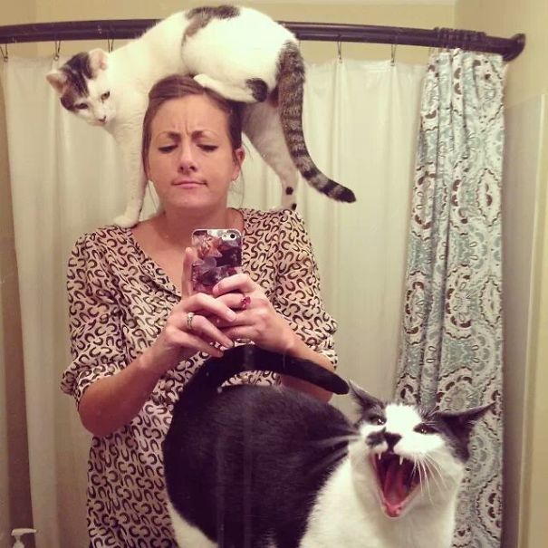 cats-dont-like-selfies-6