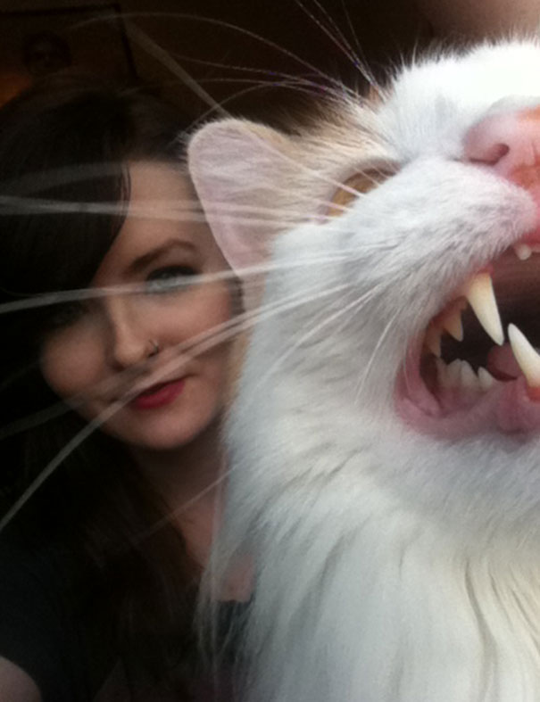 cats-dont-like-selfies-7