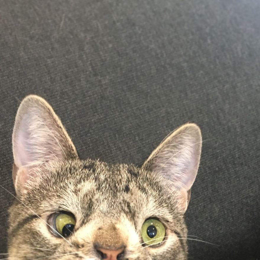 maya-extra-chromosome-cat-10