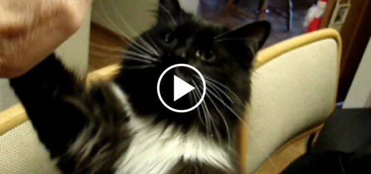 Featured-Hoote-Cat-Smart-FB