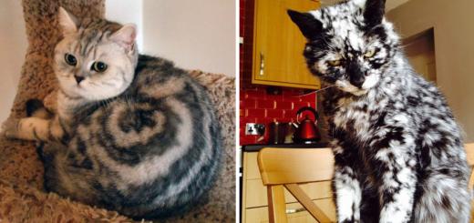 Featured-craziest-fur-markings-FB