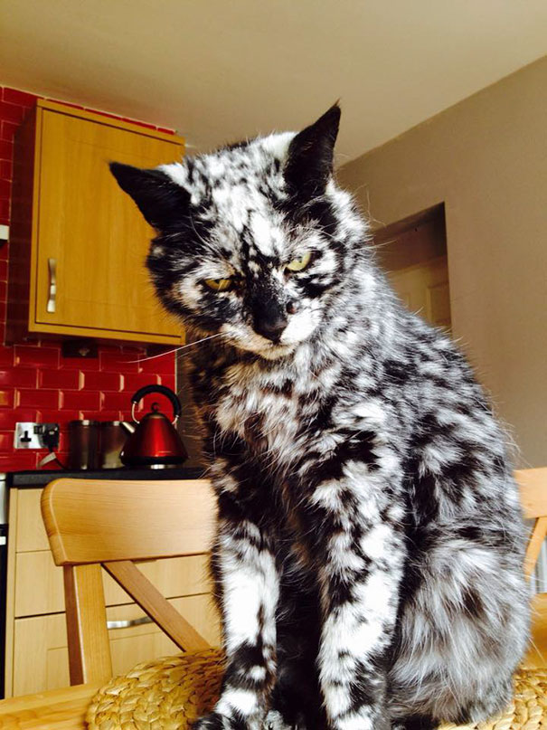 craziest-fur-markings-3