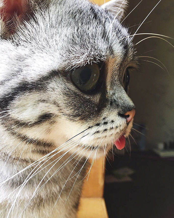 saddest-cat-luhu-maggie-11