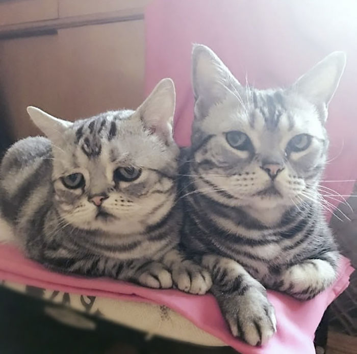 saddest-cat-luhu-maggie-15