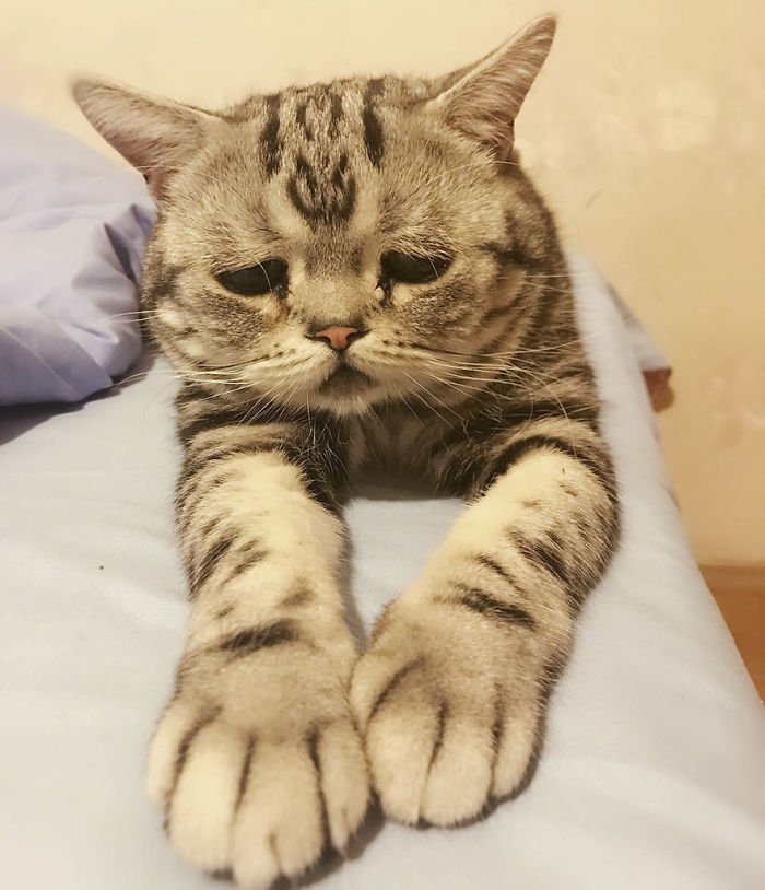 saddest-cat-luhu-maggie-17
