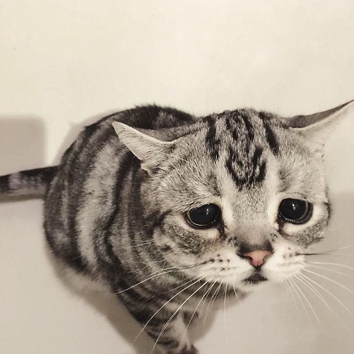saddest-cat-luhu-maggie-19