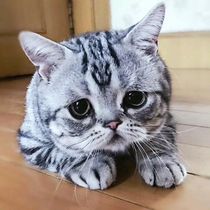saddest-cat-luhu-maggie-22