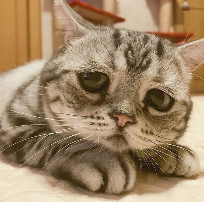saddest-cat-luhu-maggie-5