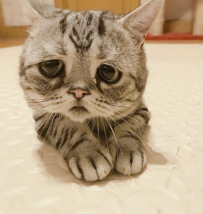 saddest-cat-luhu-maggie-6