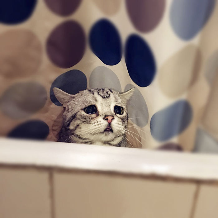 saddest-cat-luhu-maggie-7