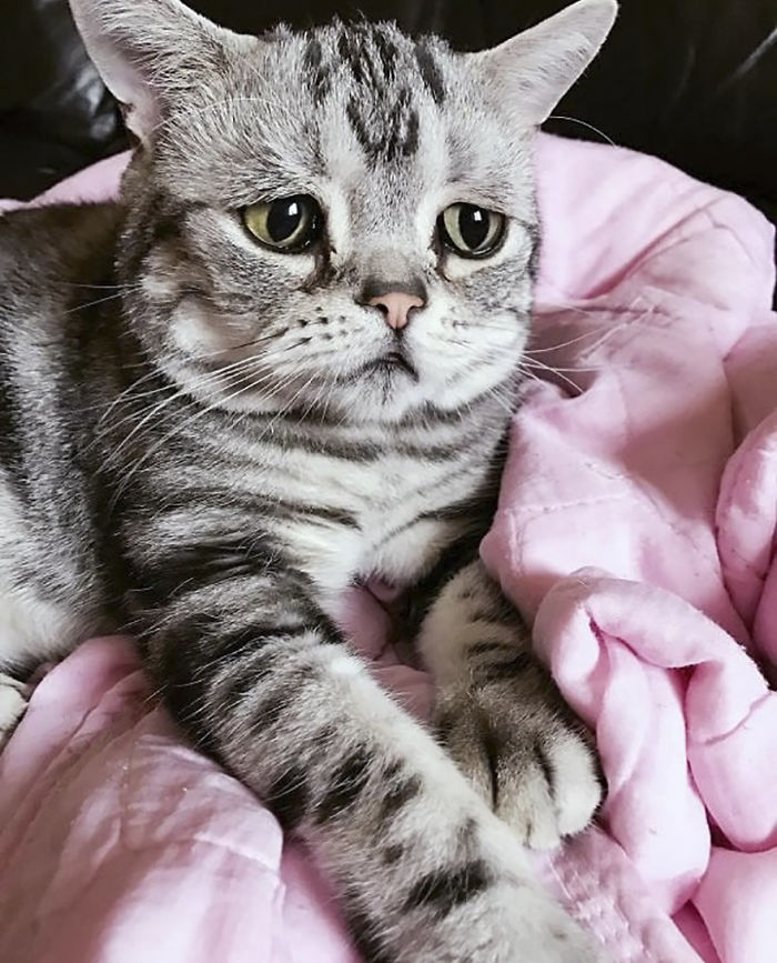saddest-cat-luhu-maggie-9
