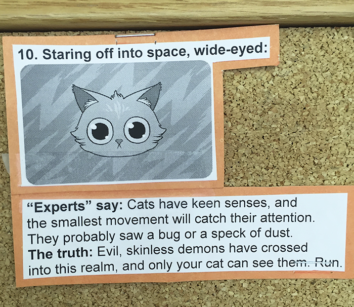 vet-cat-explanations-10