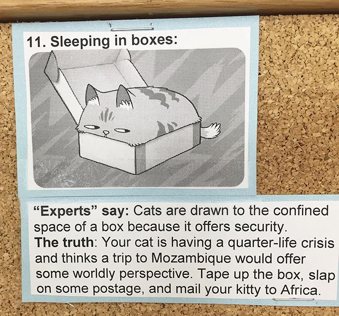 vet-cat-explanations-11