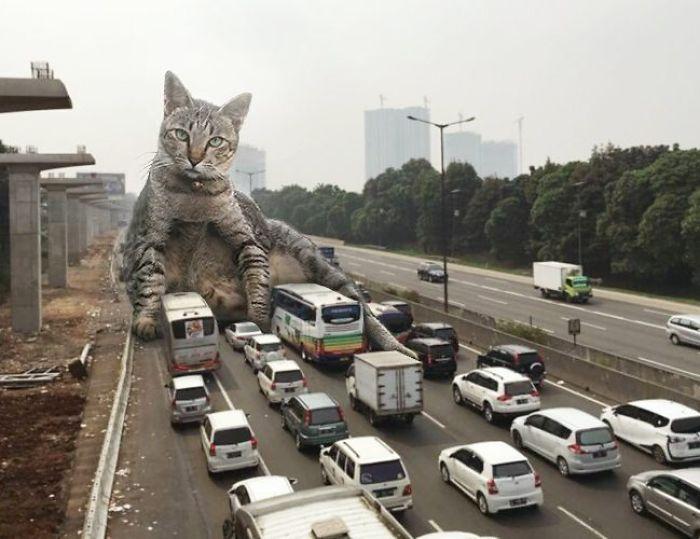 cat-giants-10