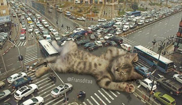 cat-giants-11