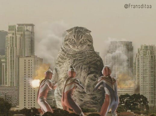 cat-giants-12